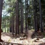 Randonnée au lac Nino forêt de pins