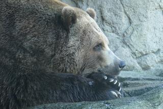 Zoo de Seattle