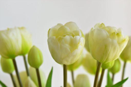Kytička tulipánov- biele