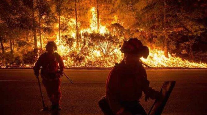 Cinsiyet açıklama partisinde orman yaktılar! Hapis cezasıyla karşı karşıyalar