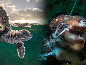 2021 okyanus fotoğrafları yarışması'nın kazananları belli oldu