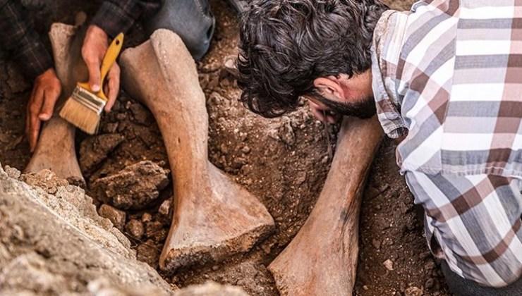 Kahramanmaraş'ta yeni bulunan fil fosilleri incelemeye alındı