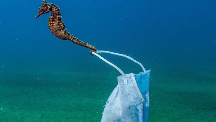 okyanus fotoğrafları yarışması'nın finalistleri belli oldu