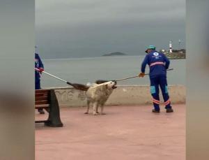 Temizlik personeli süpürgeyle, sokak köpeğinin sırtını kaşıdı