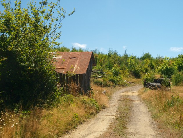 Timber Oregon