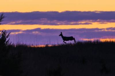 deer1_7500x5200