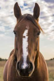horse100_4100x6100