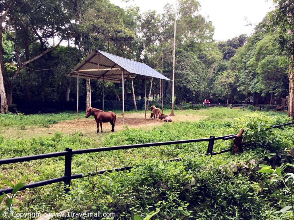 horse zoo melaka
