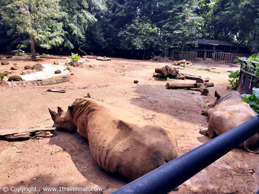 rhinoceros zoo melaka