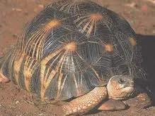 Rêver de tortue