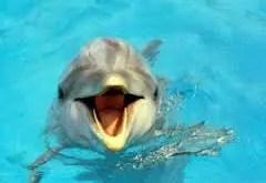 Rêver de dauphin