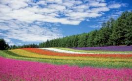 Les couleurs dans les rêves