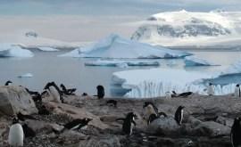 Rêver de pingouins ou de manchots