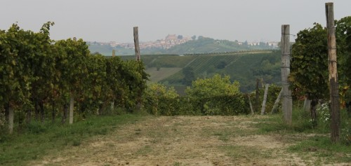 Ruche vineyard 1