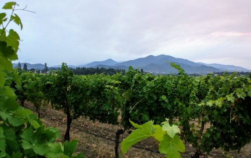 Southern OR vineyard view 1