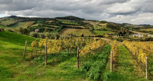 Condé vineyard 3