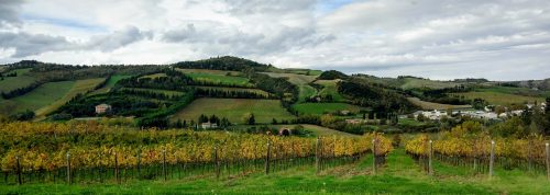 Condé vineyards 2
