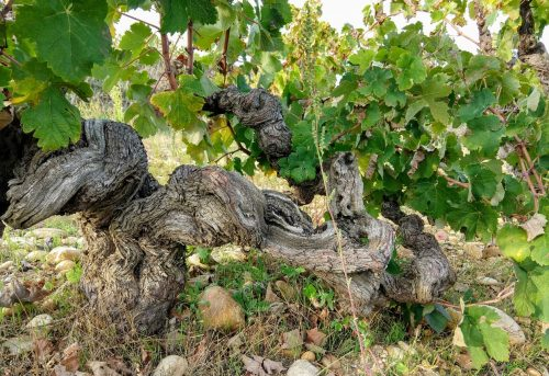 Lirac old vines