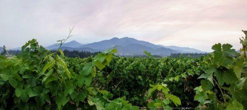 Troon vineyard 1