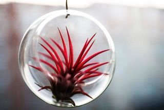 Bubbles_airplant