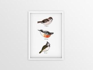 thumbnail_lille fugleplakat #4