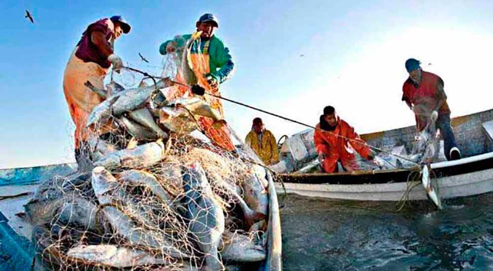El papel de la FAO en la pesca - 2000Agro Revista Industrial del Campo