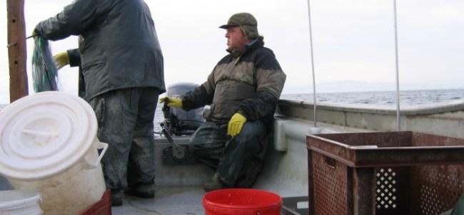Ganz normal Tag am Bodensee für Fischer Meichle (Foto: Jan Thomas Otte)