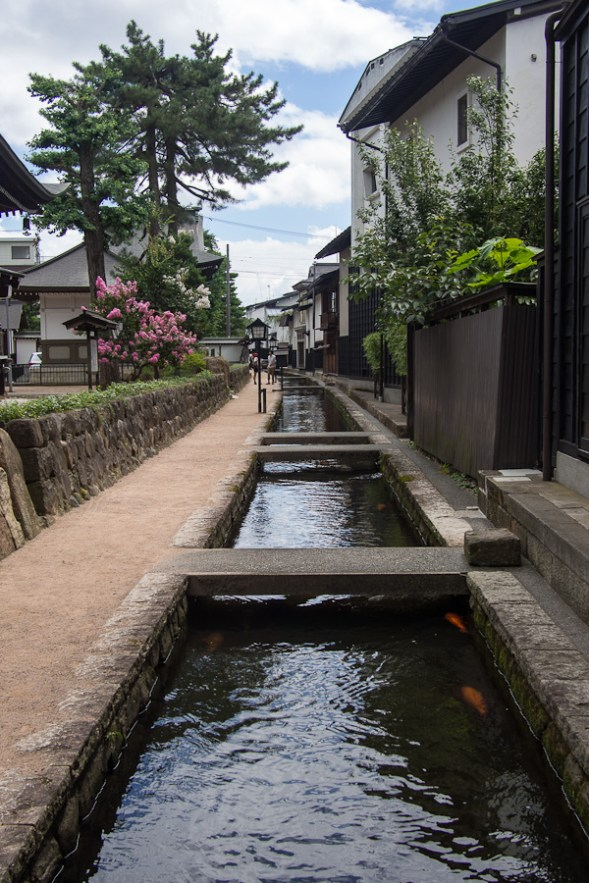 Every winter the people of Furukawa gather all the carp in the stream and move them to their winter home