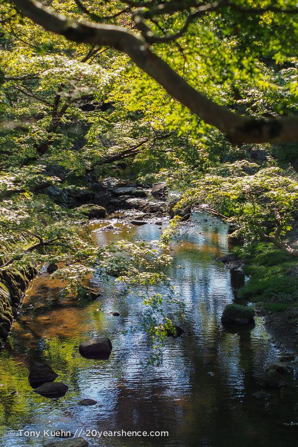 More of Nara Park