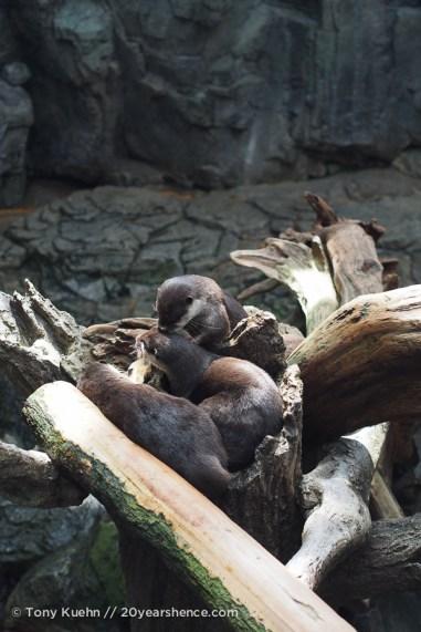 A pile of cute 03
