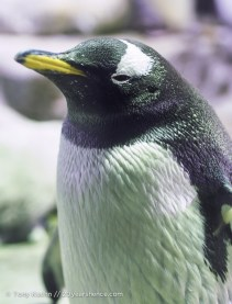 Penguin! 06