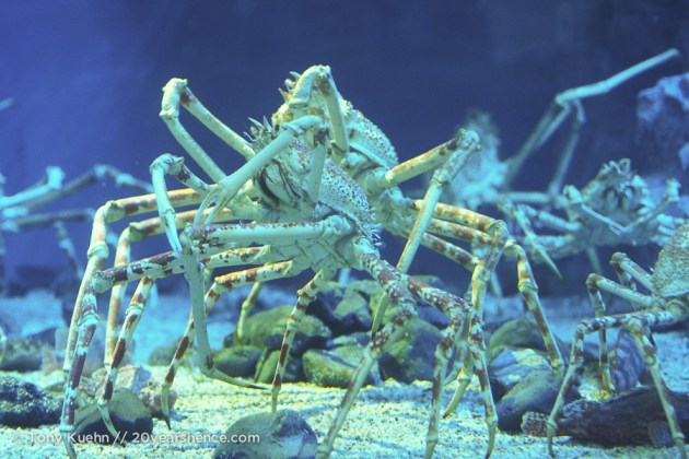 Creepy, creepy crabs