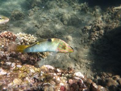 Mystery stripey fish
