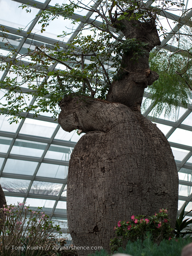 The name is almost as goofy as the tree itself: Boabob