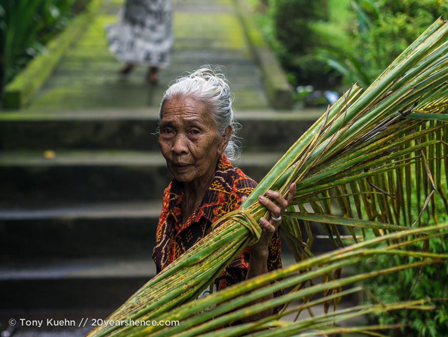 Old lady harvesting in Bali, Indonesia