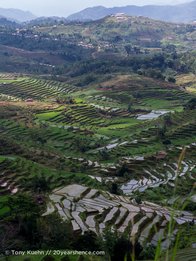 The rice terraces of Ruteng