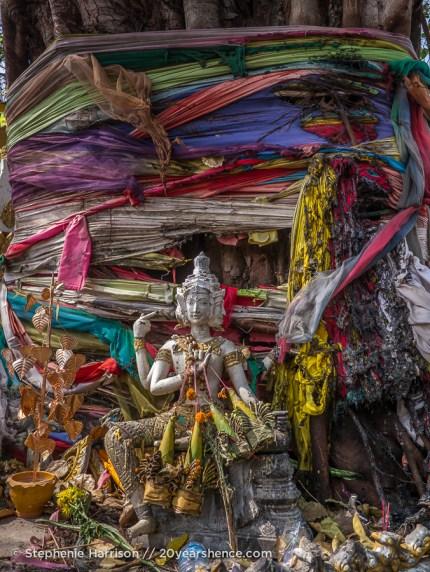 Tree outside a temple in Savannakhet