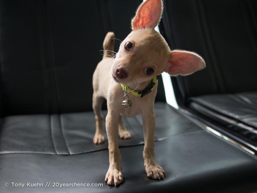 Mickey, a dog, Saigon