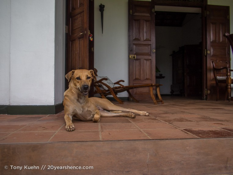 Mumu awaits on the steps