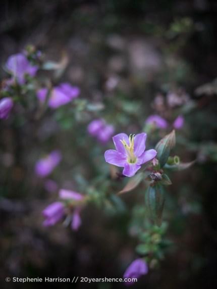 Flowers in Ella, Sri Lanka