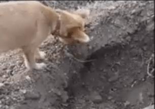فيديو مؤثر كلب يقوم بتصرف غريب جدا