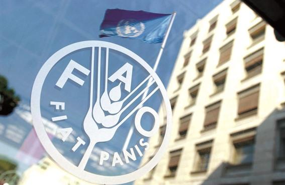 منظمة الأمم المتحدة للأغذية والزراعة (الفاو)