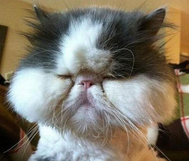 قطط ملدوغة