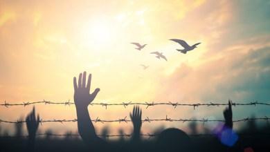 يوم المُهاجرين العالمي - تعبيرية