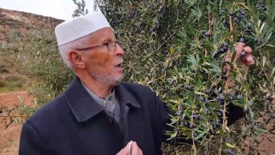 مزارعو كاباو يستبشرون بغزارة الأمطار نحو انتاج وفير لزيت الزيتون