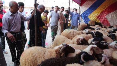 ركود يشهده سوق المواشي في مدينة البيضاء