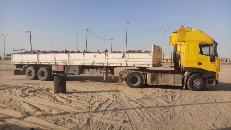 الشرطة الزراعية فرع الواحات تضبط شحنة مخالفة من الأغنام قادمة من السودان