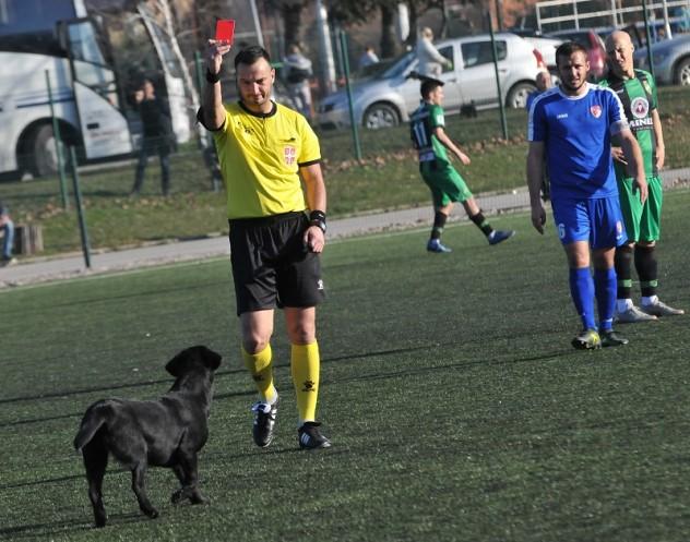 حكم يشهر البطاقة الحمراء لكلب اقتحم الملعب في دوري الدرجة الثانية في صربيا