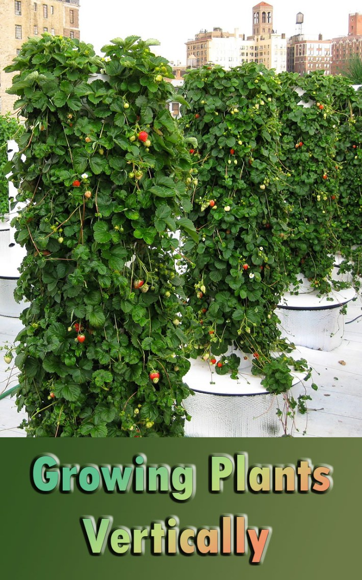 Growing Plants Vertically