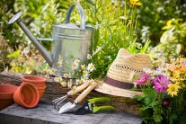 40 Top Gardening Tips and Tricks